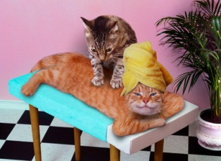 Our cat Bree even massages!